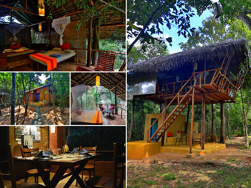Tree Houses in Sri Lanka | Best Tree House is Sri Lanka | Places to