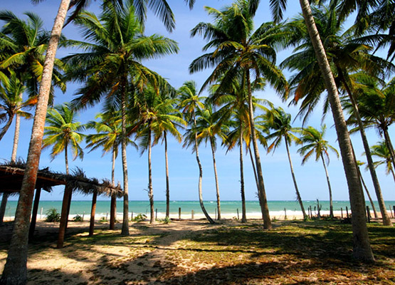 Beach Holidays Hotels in Sri Lanka, Beach Hotels in Sri Lanka, Best Beaches of Sri Lanka
