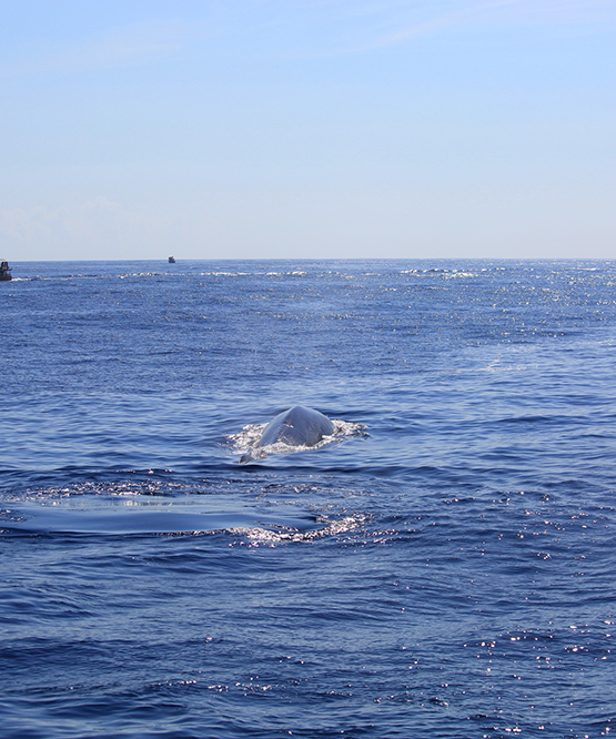 Whale Watching in Sri Lanka, Whale Watching Trips in Mirissa Sri Lanka, Mirissa Whale Watching Tours
