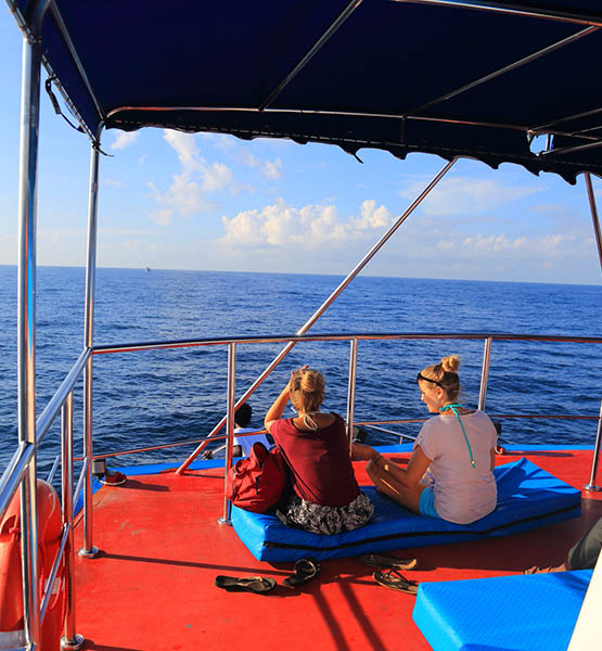 Mirissa Whale Watching, Mirissa Whale Watching Tours, Whale and Dolphin Watching Boat Tours in Mirissa
