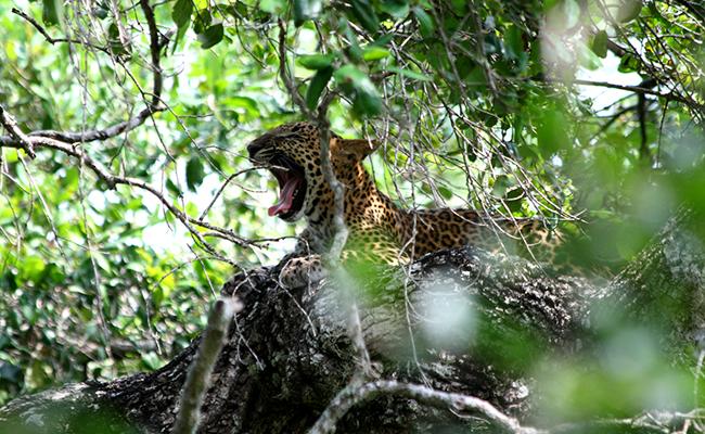 Sri Lanka Wildlife Tours  Sri Lanka Wildlife Safari Tours