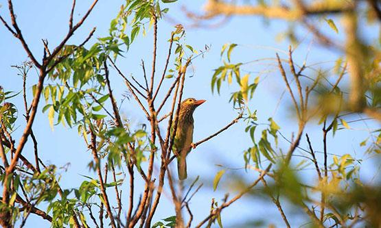 Anawilundawa Sanctuary | Bird Watching in Sri Lanka | Bird