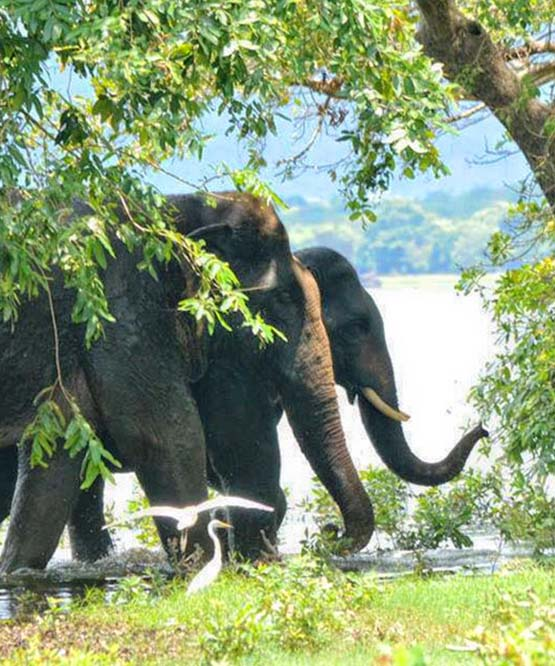 Wilpattu Safari Tours, Wildlife Safaris in Wilpattu, Wildlife Safari Tours in Wilpattu National Park