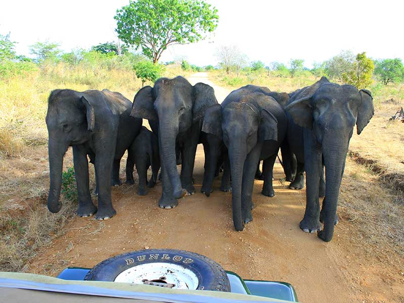 Udawalawe Safari Tours, Jeep Safaris in udawalawe, udawalawe Safari elephant tours, Udawalawe Elephant Trails Safari Tours