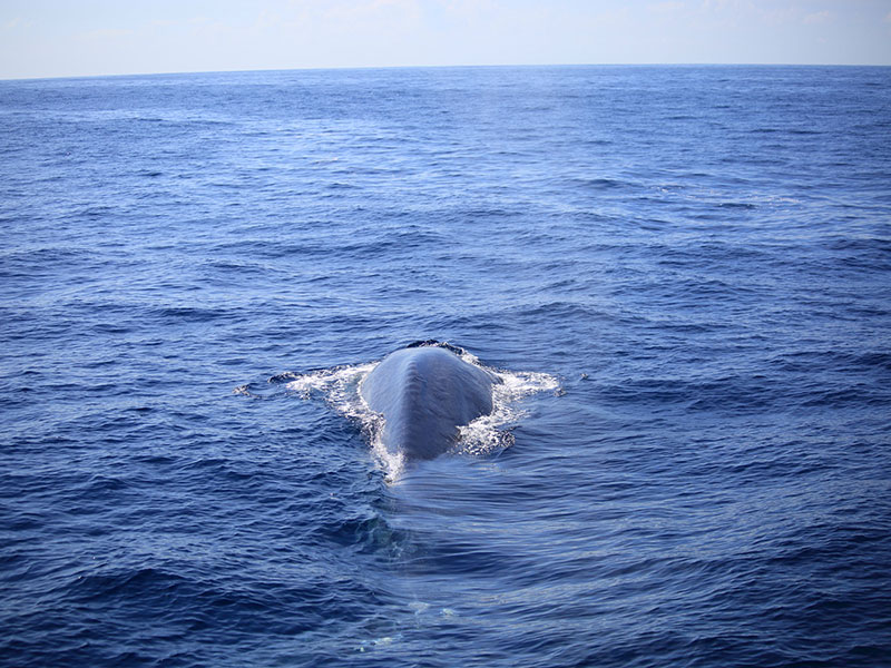 Whale watching day tours in Mirissa from Colombo - Mirissa Whale watching day tours - Day Whale watching tours - Day Tours to Mirissa Whale watching - Day trip to Mirissa Whale watching - Whale watching in Mirissa Day trips from Colombo