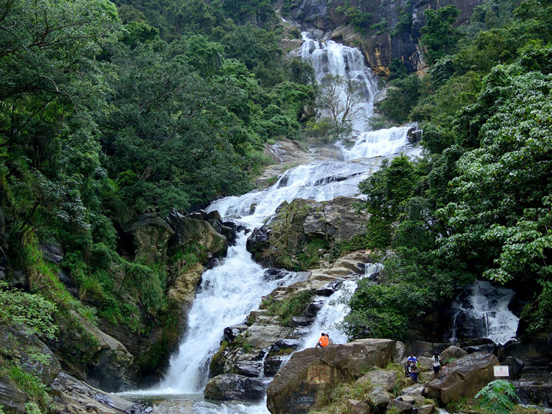 Sinharaja Rain forest day tour - day tours to Sinharaja rain forest - Sinharaja day trekking trip - Day trips to Sinharaja rain forest trekking - Trekking day trip in Sinharaja rain forest - Trekking day tour to Sinharaja Rain Forest from Colombo