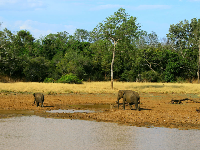 how to get to udawalawe national park
