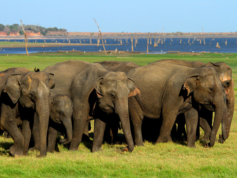Don't miss when in Sri Lanka, Sri Lanka Don't miss, Don't miss of Sri Lanka
