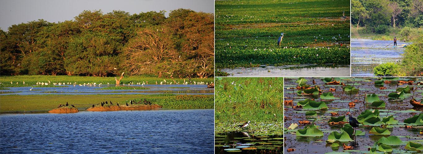 Anawilundawa Sanctuary | Bird Watching in Sri Lanka | Bird Watching Sites  in Sri Lanka